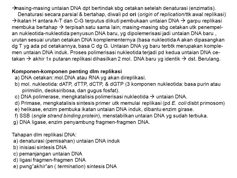  masing-masing untaian DNA dpt bertindak sbg cetakan setelah denaturasi (enzimatis). Denaturasi secara parsial & bertahap, diwali pd ori (origin of r