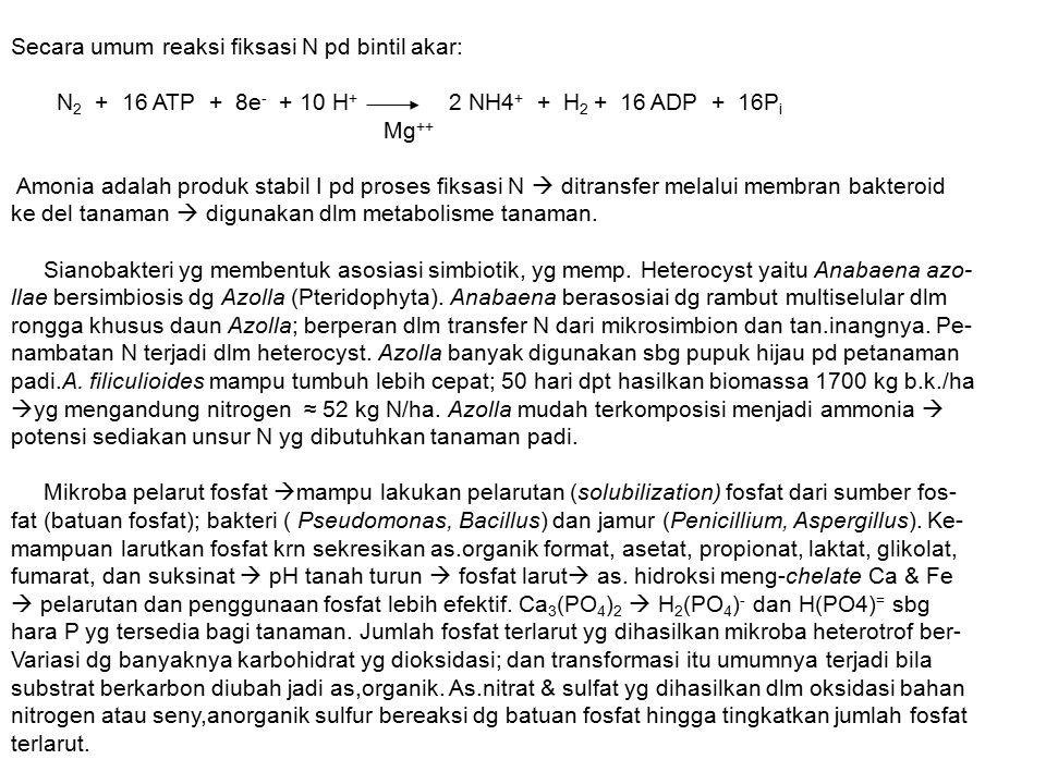 Secara umum reaksi fiksasi N pd bintil akar: N 2 + 16 ATP + 8e - + 10 H + 2 NH4 + + H 2 + 16 ADP + 16P i Mg ++ Amonia adalah produk stabil I pd proses