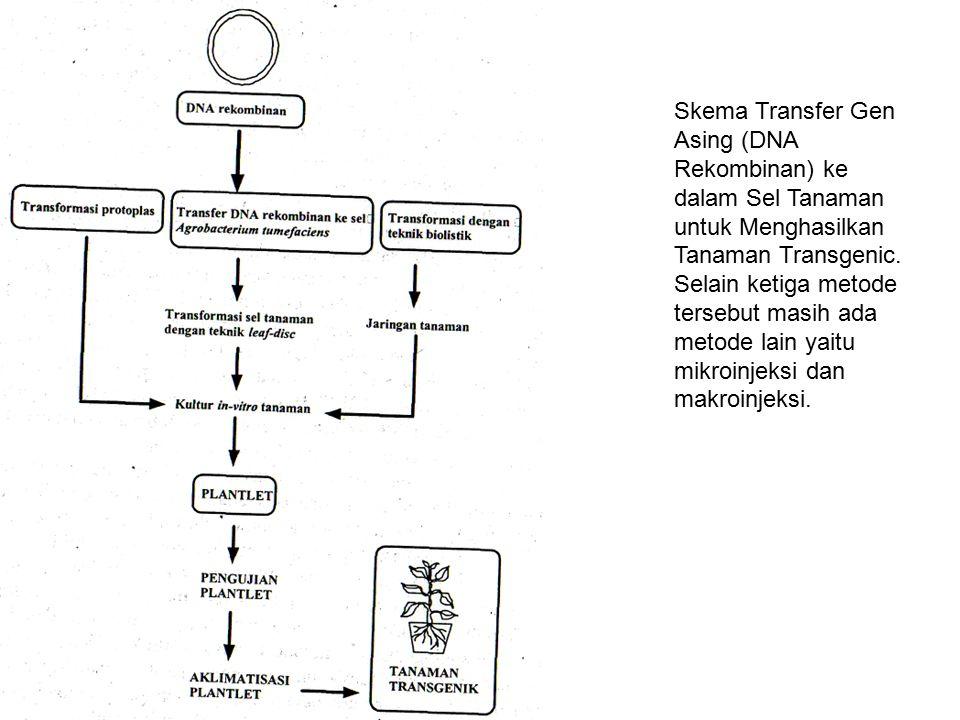 Skema Transfer Gen Asing (DNA Rekombinan) ke dalam Sel Tanaman untuk Menghasilkan Tanaman Transgenic. Selain ketiga metode tersebut masih ada metode l