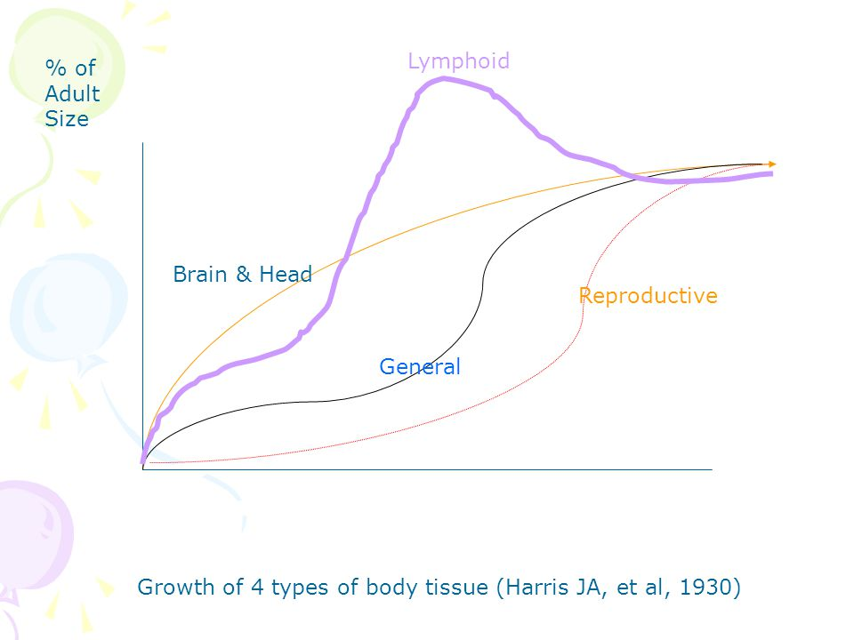 Growth of 4 types of body tissue (Harris JA, et al, 1930) Lymphoid Brain & Head General Reproductive % of Adult Size