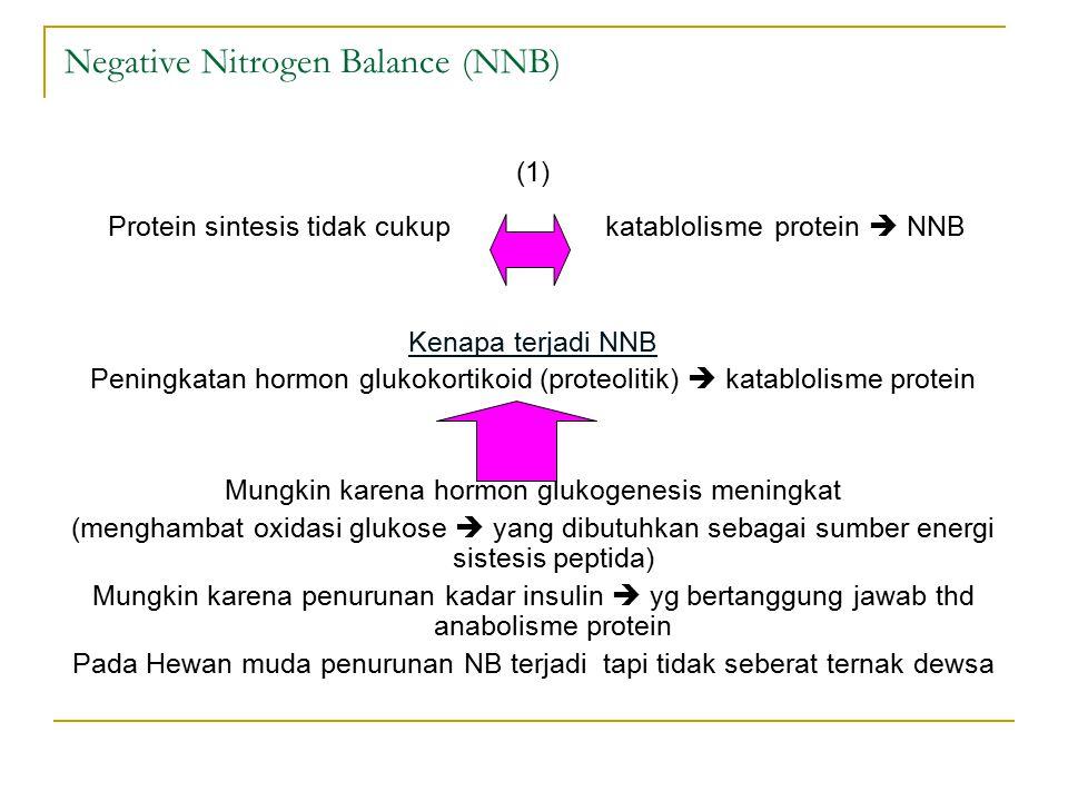 Negative Nitrogen Balance (NNB) (1) Protein sintesis tidak cukup katablolisme protein  NNB Kenapa terjadi NNB Peningkatan hormon glukokortikoid (proteolitik)  katablolisme protein Mungkin karena hormon glukogenesis meningkat (menghambat oxidasi glukose  yang dibutuhkan sebagai sumber energi sistesis peptida) Mungkin karena penurunan kadar insulin  yg bertanggung jawab thd anabolisme protein Pada Hewan muda penurunan NB terjadi tapi tidak seberat ternak dewsa