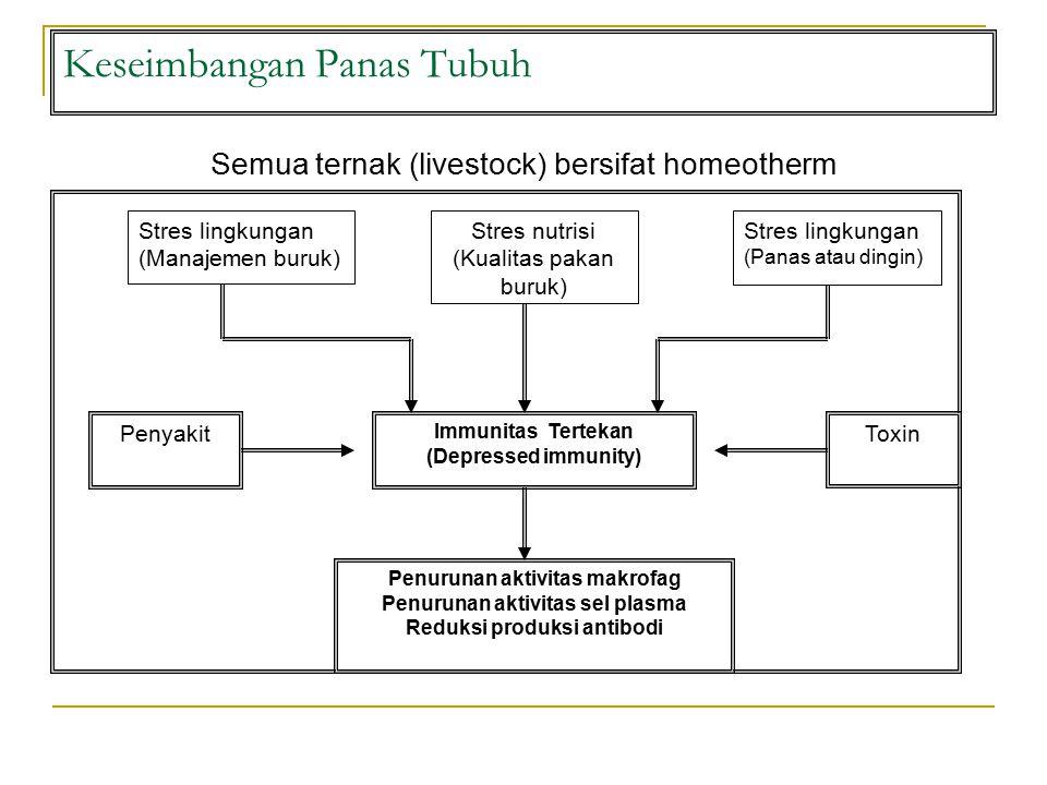 Keseimbangan Panas Tubuh Semua ternak (livestock) bersifat homeotherm Immunitas Tertekan (Depressed immunity) Stres nutrisi (Kualitas pakan buruk) Stres lingkungan (Panas atau dingin) Penyakit Penurunan aktivitas makrofag Penurunan aktivitas sel plasma Reduksi produksi antibodi Stres lingkungan (Manajemen buruk) Toxin