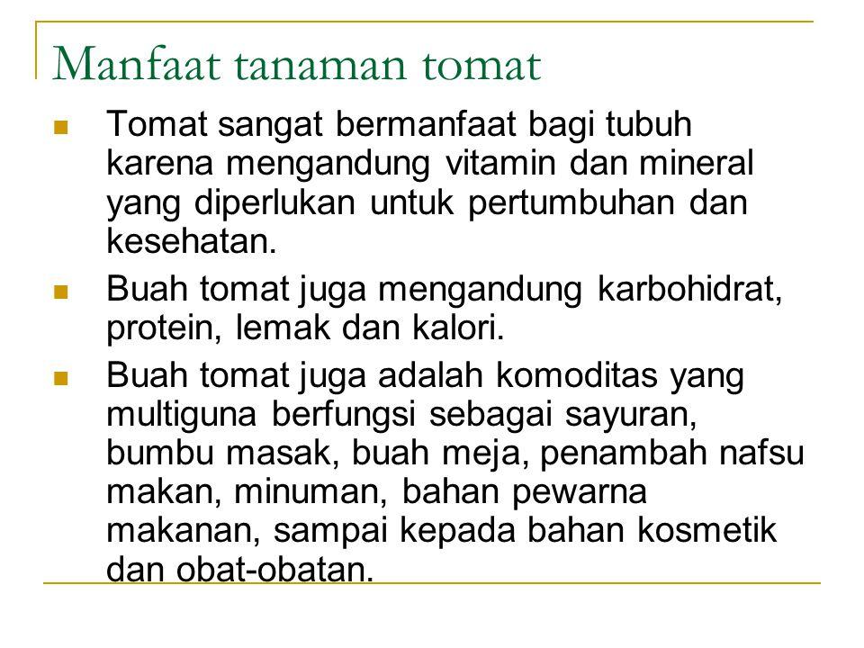 Manfaat tanaman tomat Tomat sangat bermanfaat bagi tubuh karena mengandung vitamin dan mineral yang diperlukan untuk pertumbuhan dan kesehatan. Buah t