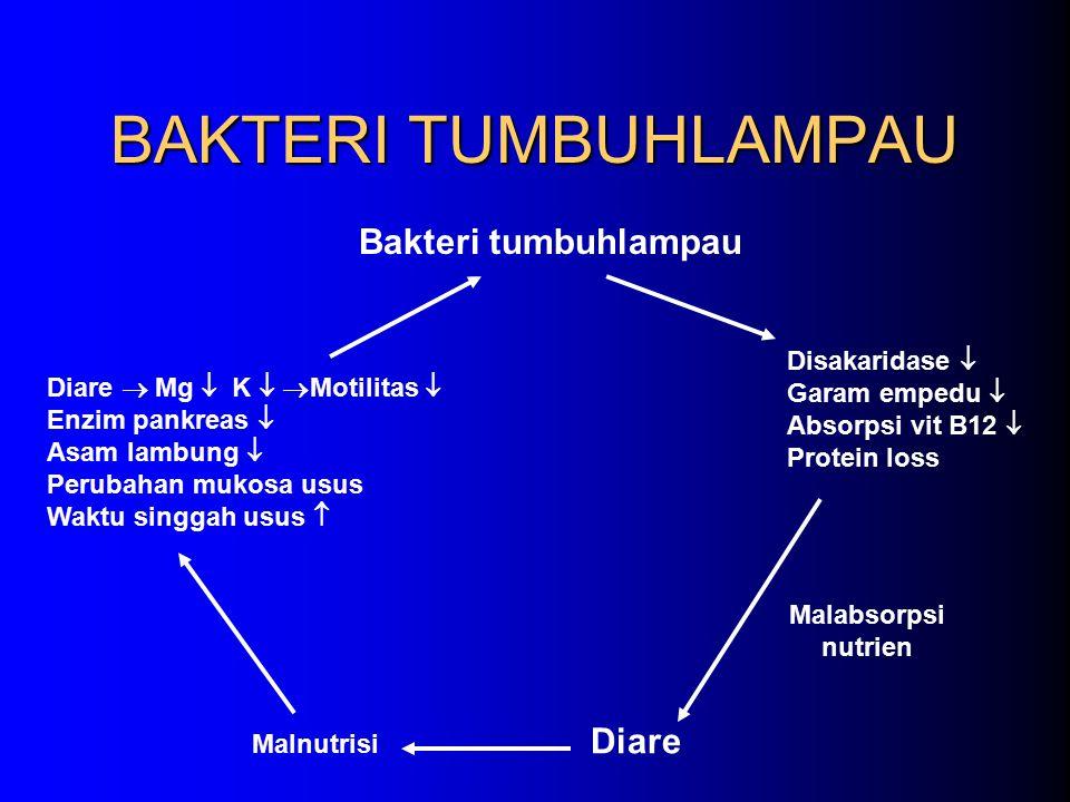 BAKTERI TUMBUHLAMPAU Bakteri tumbuhlampau Diare  Mg  K   Motilitas  Enzim pankreas  Asam lambung  Perubahan mukosa usus Waktu singgah usus  Di