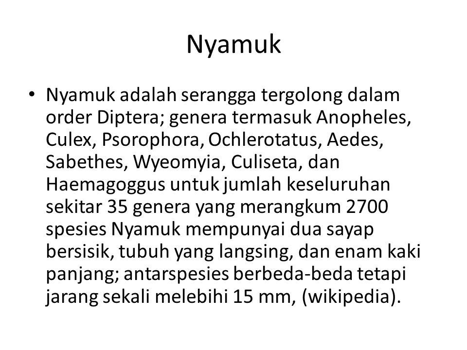 Nyamuk Nyamuk adalah serangga tergolong dalam order Diptera; genera termasuk Anopheles, Culex, Psorophora, Ochlerotatus, Aedes, Sabethes, Wyeomyia, Cu