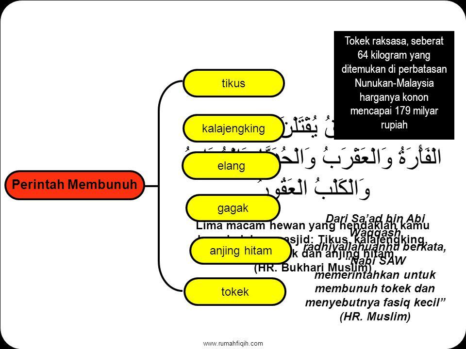 www.rumahfiqih.com Perintah Membunuh خَمْسٌ فَوَاسِقُ يُقْتَلْنَ فِي الْحَرَمِ الْفَأْرَةُ وَالْعَقْرَبُ وَالْحُدَيَّا وَالْغُرَابُ وَالْكَلْبُ الْعَقُورُ Lima macam hewan yang hendaklah kamu bunuh dalam masjid: Tikus, kalajengking, elang, gagak dan anjing hitam.