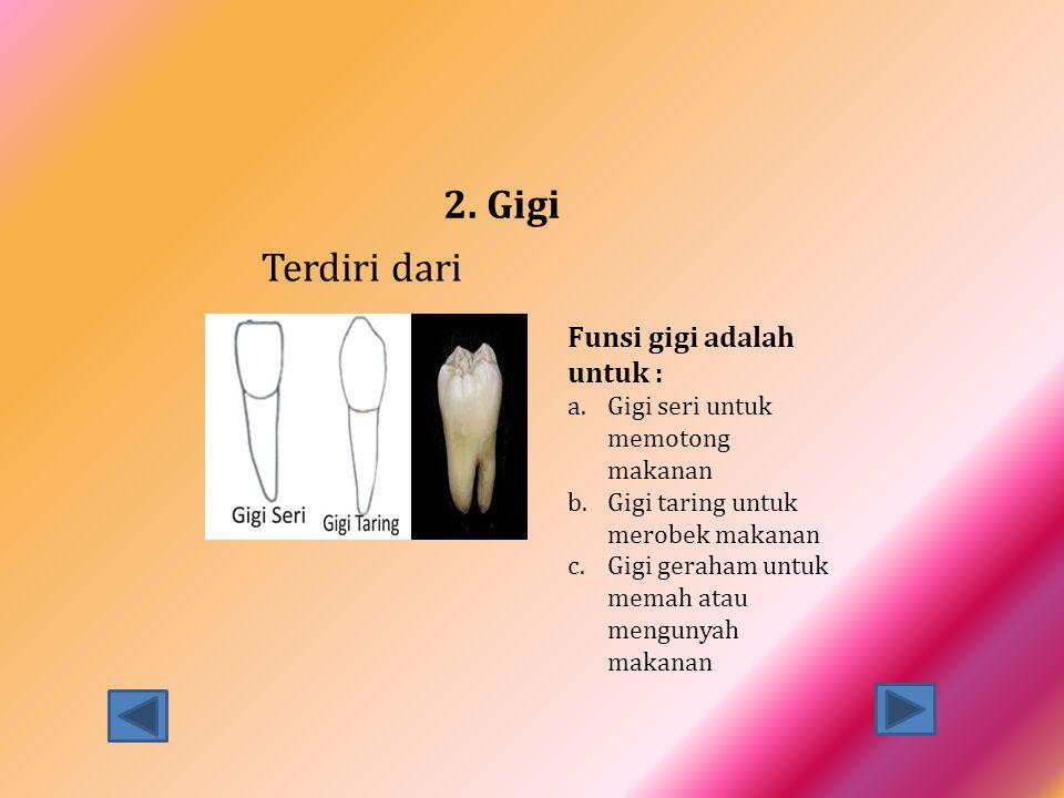 2. Gigi Terdiri dari Funsi gigi adalah untuk : a.Gigi seri untuk memotong makanan b.Gigi taring untuk merobek makanan c.Gigi geraham untuk memah atau