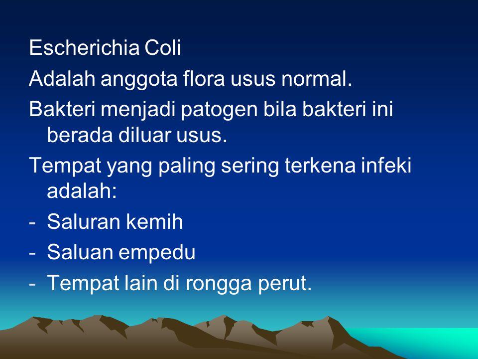 Escherichia Coli Adalah anggota flora usus normal. Bakteri menjadi patogen bila bakteri ini berada diluar usus. Tempat yang paling sering terkena infe