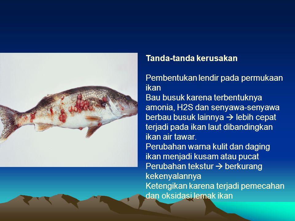 Tanda-tanda kerusakan Pembentukan lendir pada permukaan ikan Bau busuk karena terbentuknya amonia, H2S dan senyawa-senyawa berbau busuk lainnya  lebi