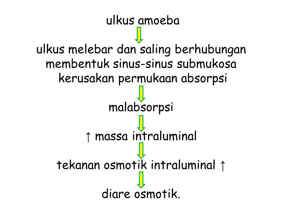 ulkus amoeba ulkus melebar dan saling berhubungan membentuk sinus-sinus submukosa kerusakan permukaan absorpsi malabsorpsi ↑ massa intraluminal tekanan osmotik intraluminal ↑ diare osmotik.