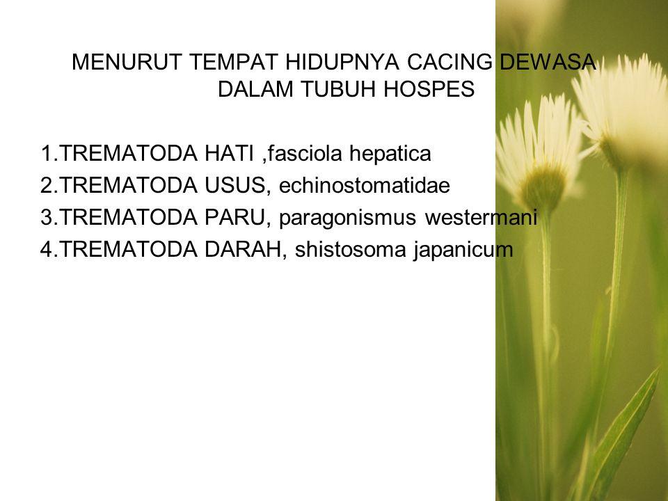 TREMATODA HATI (liver flukes) 1.Clonorchis sinensis 2.Opisthorchis felineus 3.Opisthorchis viverrini 4.Fasciola hepatica 5.Fasciola gigantica