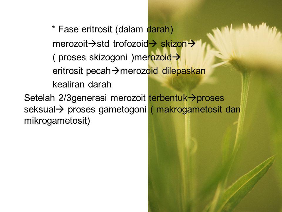 * Fase eritrosit (dalam darah) merozoit  std trofozoid  skizon  ( proses skizogoni )merozoid  eritrosit pecah  merozoid dilepaskan kealiran darah