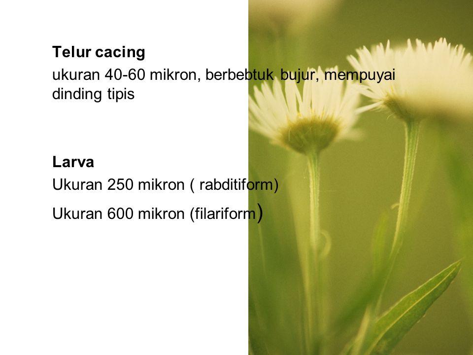 SIKLUS HIDUP Telur yang keluar dengan tinja----menetas keluar larva rabditiform-----larva filariform--- --menembus kulit----kapiler darah------ jantung kanan-------paru------bronkus----- trakea-----usus halus-------cacing dewasa di usus halus