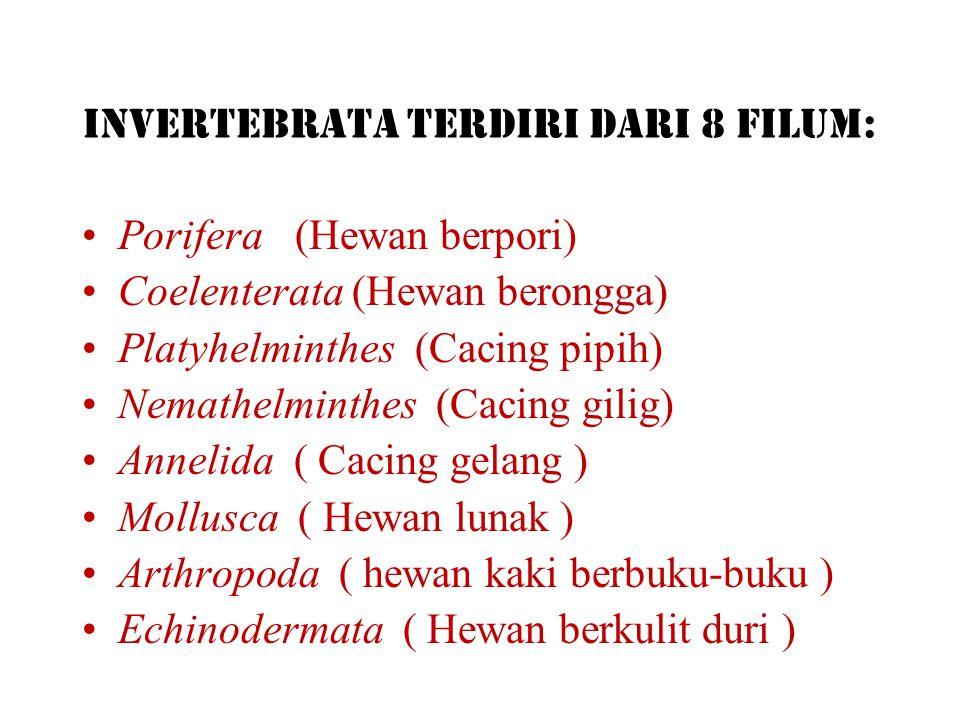 A.Avertebrata Tidak bertulang belakang 1.