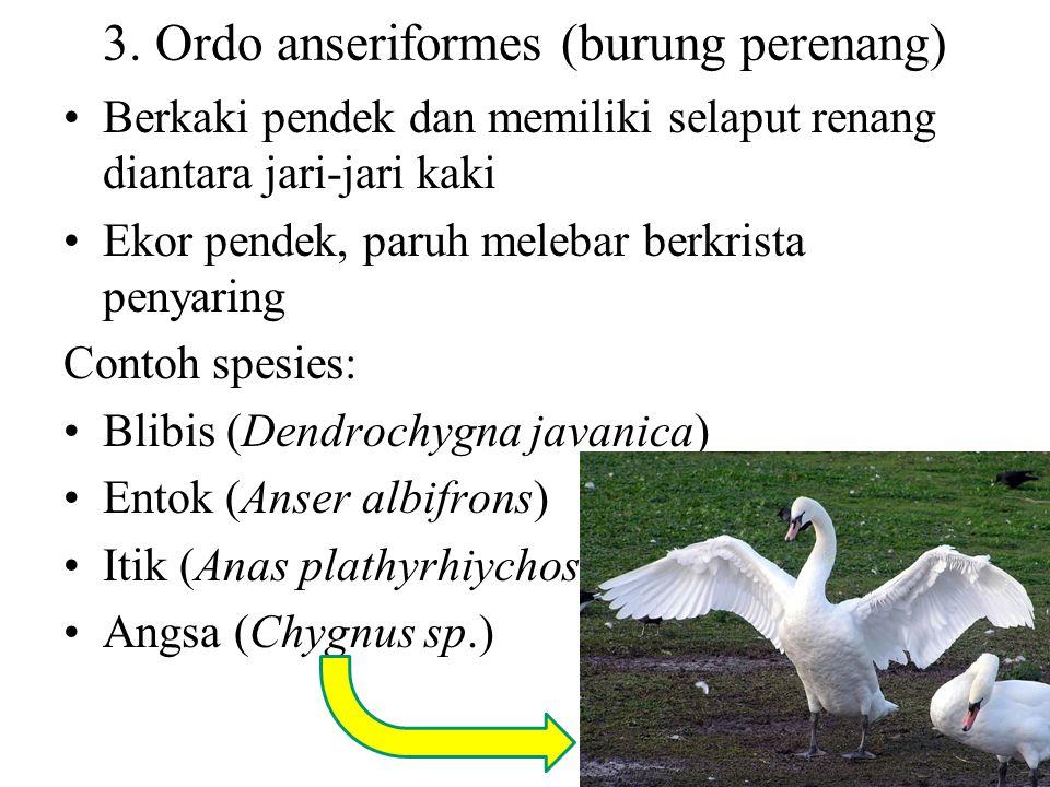 kasuari (Casuarius casuarius) Apteryx australis Rea americana