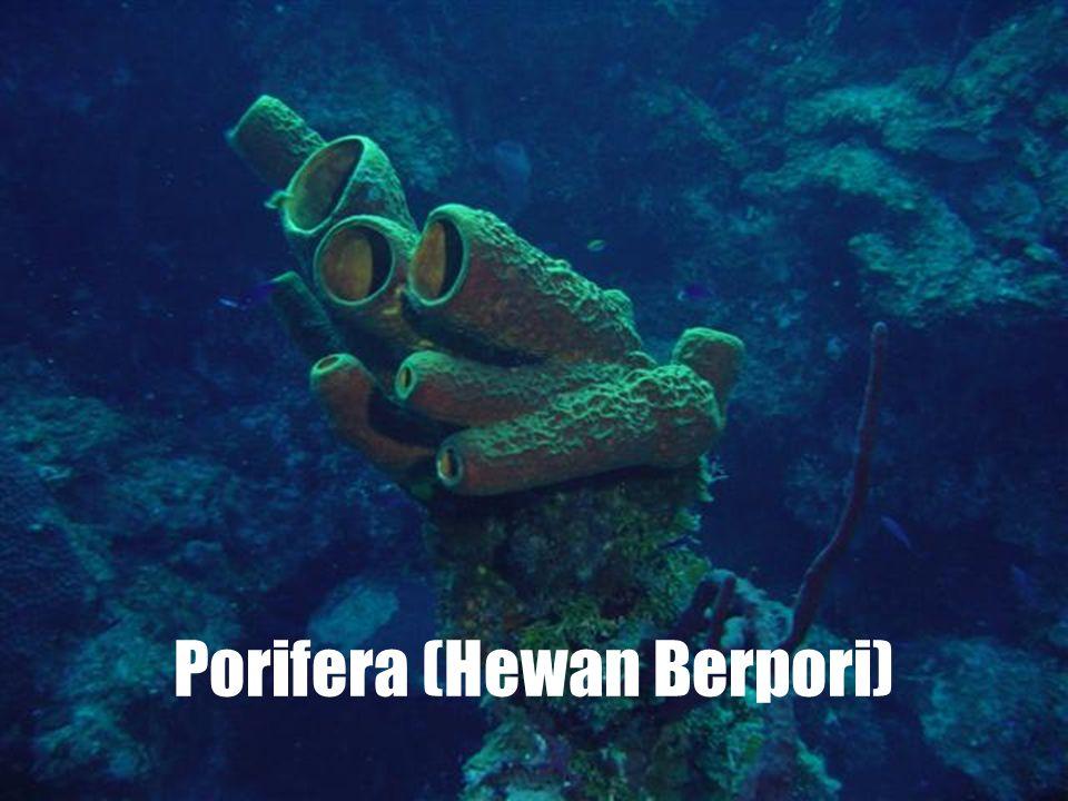 Invertebrata terdiri dari 8 filum: Porifera (Hewan berpori) Coelenterata (Hewan berongga) Platyhelminthes (Cacing pipih) Nemathelminthes (Cacing gilig