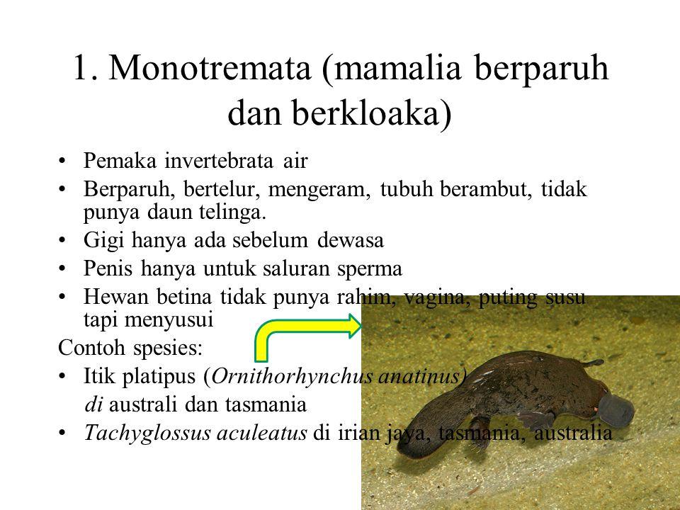 1.Monotremata 2.Insectivora 3.Carnivora 4.Rodentia 5.Lagomorpha 6.Sirenia 7.Cetacea 8.Chiroptera 9.Dermoptera 10.Masupialia 11.Proboscidea 12.Pinniped
