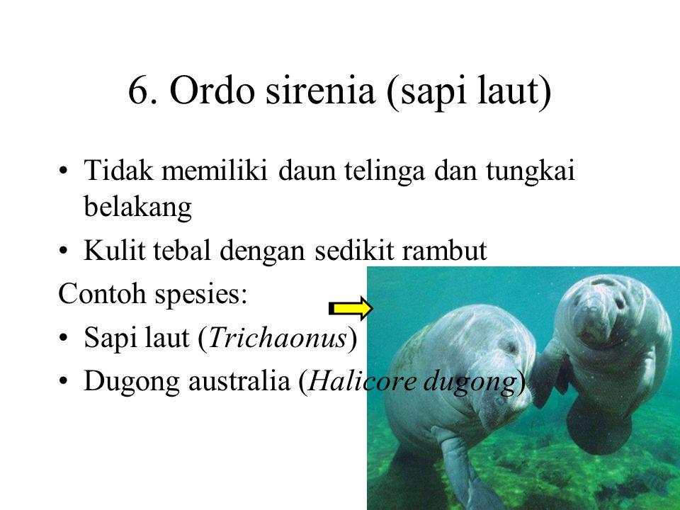5. Ordo lagomorpha Memiliki ciri seperti rodentia tapi gigi serinya empat atau lebih Ekor pendek, kuat dan dapat di gerakkan Contohnya adalah berbagai