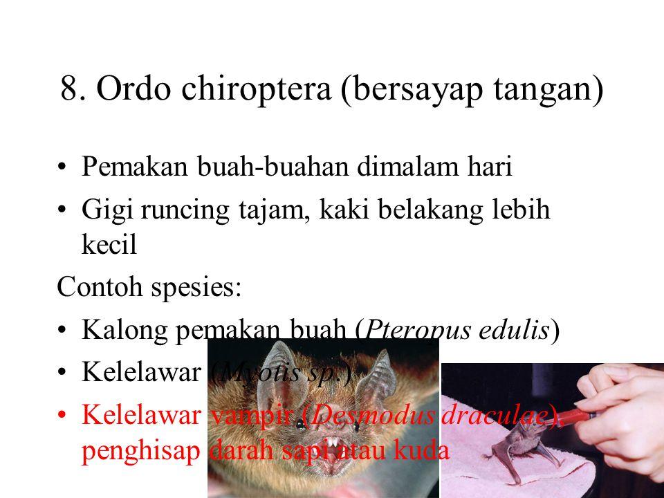 7. Ordo cetacea (paus) Tidak memiliki daun telinga, rambut, dan kelenjar di kulit Tidak ada tungkai belakang Bentuk gigi semua sama dan tidak berlapis