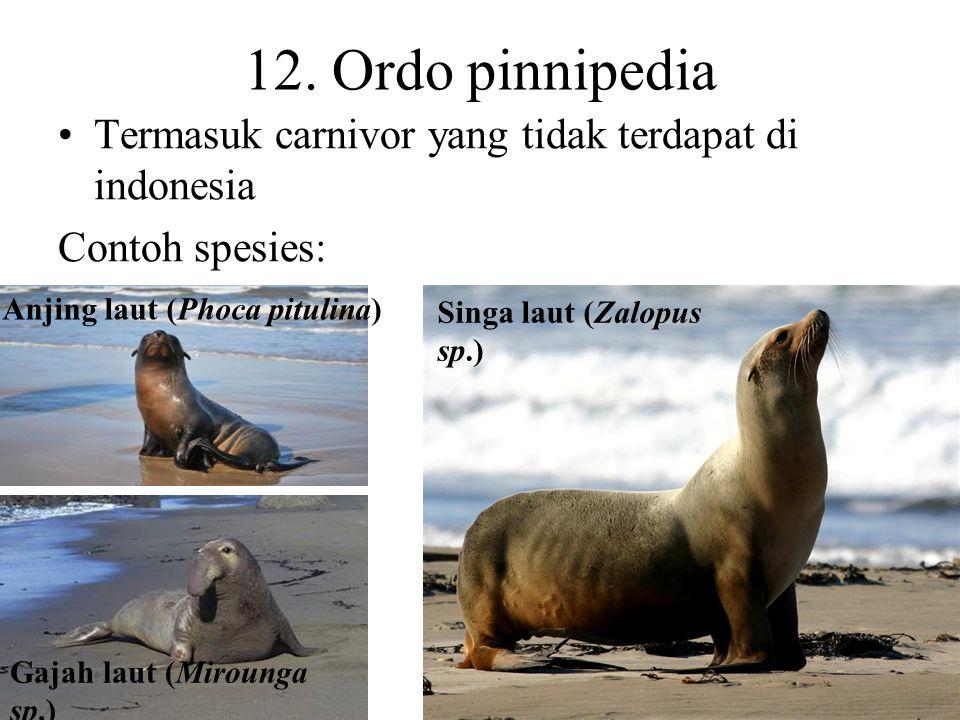 11. Ordo proboscidea (berprobosis) Probosis (modifikasi hidung menadi belalai) dengan dua lubang hidung Tubuh besar, kepala besar, leher pendek dan te