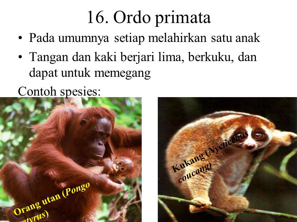 15. Ordo artiodactyla (berkuku genap) Digolongkan menjadi dua, yaitu: ruminansia dan nonruminansia Ruminansia adalah mamalia memamahbiak Kaki panjang