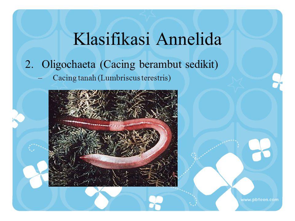 Klasifikasi Annelida 1.Polichaeta (Cacing berambut banyak) –Cacing palolo (Eunice sp) dan cacing wawo (Lysidice oele)
