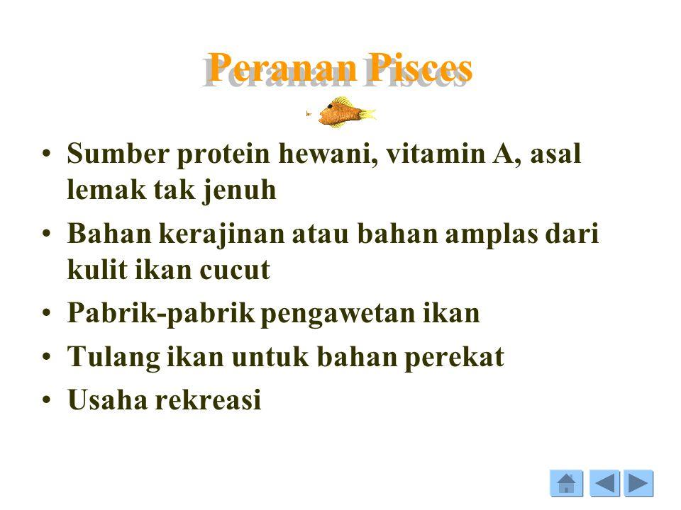 Struktur Pisces