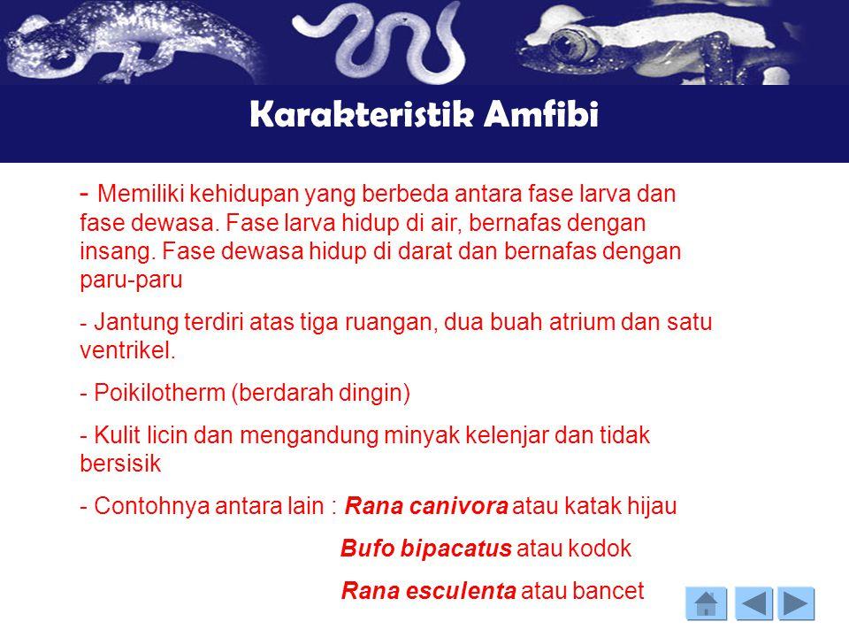 Kelas Amfibi