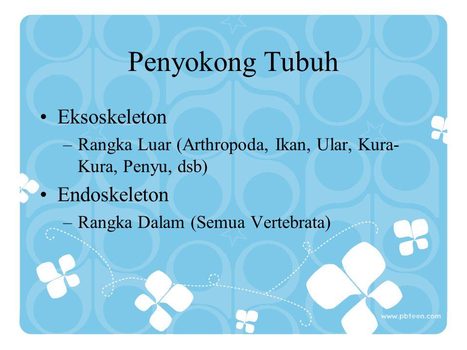 Lapisan Tubuh/Lembaga (Eumetazoa) a.Diploblastik ( Di = 2 ) Memiliki 2 lapisan tubuh/lembaga = 1.