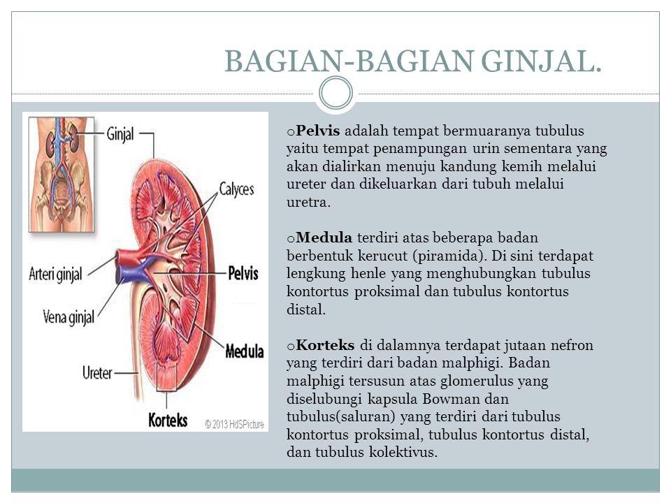 Gangguan pada paru-paru. Asma atau sesak nafas.