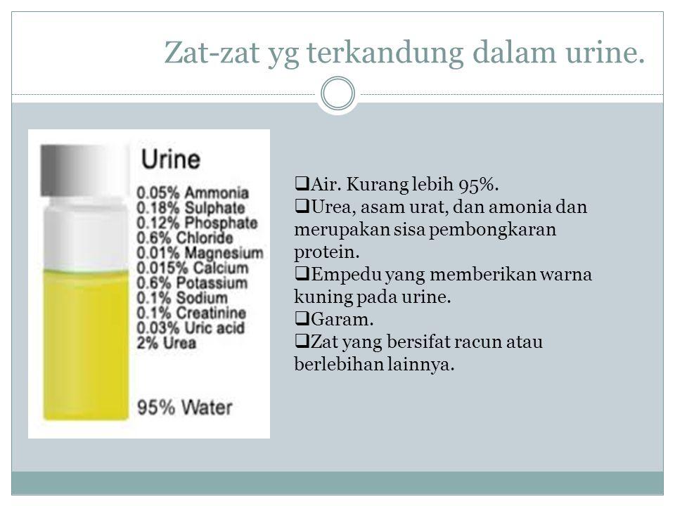 Zat-zat yg terkandung dalam urine.  Air. Kurang lebih 95%.  Urea, asam urat, dan amonia dan merupakan sisa pembongkaran protein.  Empedu yang membe