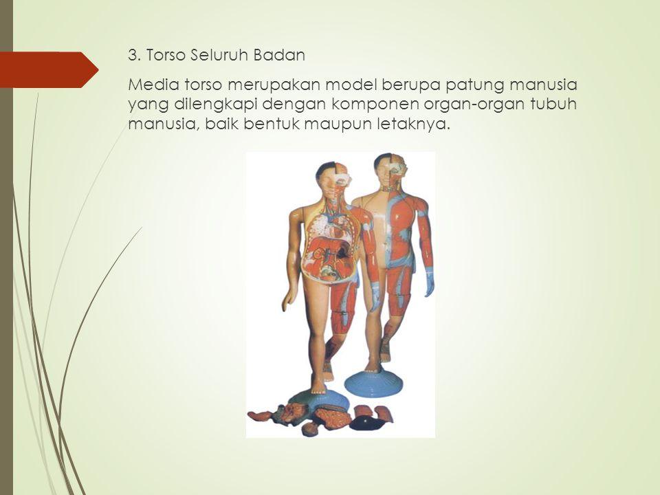 3. Torso Seluruh Badan Media torso merupakan model berupa patung manusia yang dilengkapi dengan komponen organ-organ tubuh manusia, baik bentuk maupun