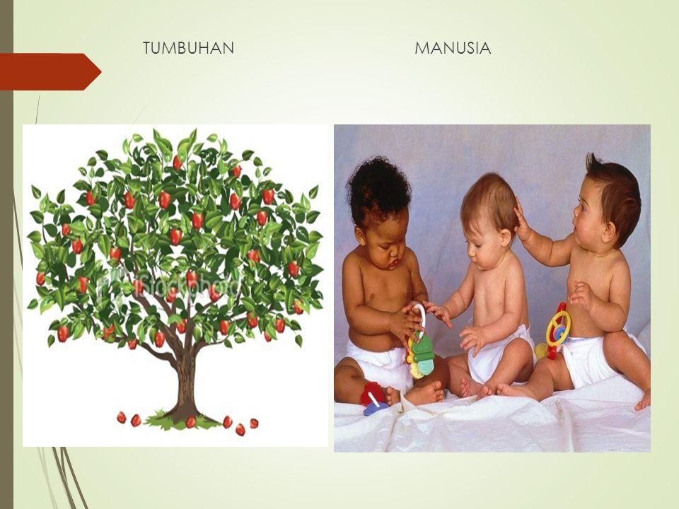 TUMBUHANMANUSIA