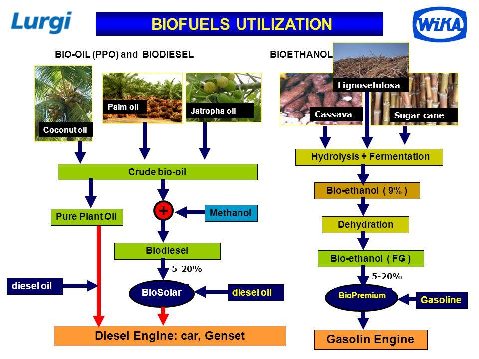 BIOFUELS UTILIZATION 5-20% Crude bio-oil Pure Plant Oil Biodiesel diesel oil BioSolar Diesel Engine: car, Genset Coconut oil Palm oil Jatropha oil BIO