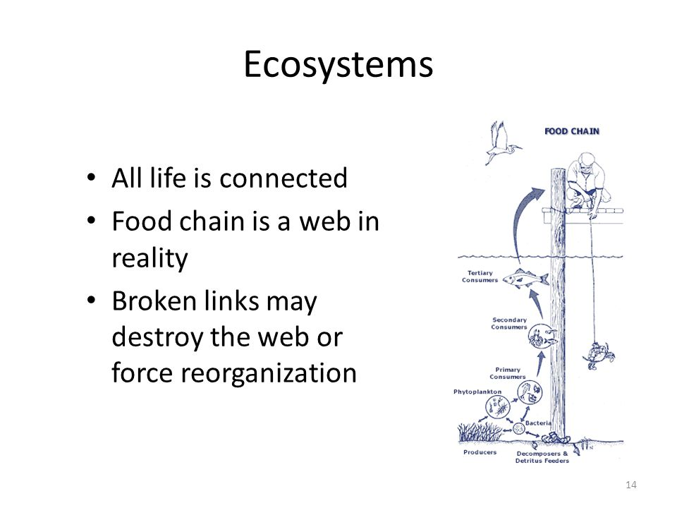 Ecosystems All life is connected Food chain is a web in reality Broken links may destroy the web or force reorganization 14