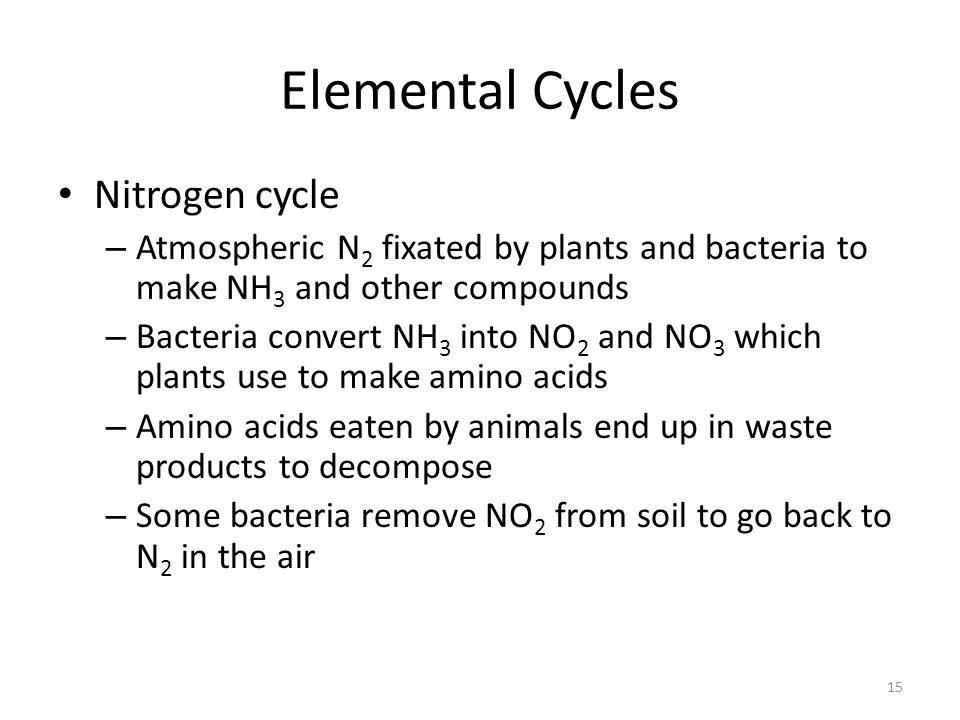Elemental Cycles Nitrogen cycle – Atmospheric N 2 fixated by plants and bacteria to make NH 3 and other compounds – Bacteria convert NH 3 into NO 2 an