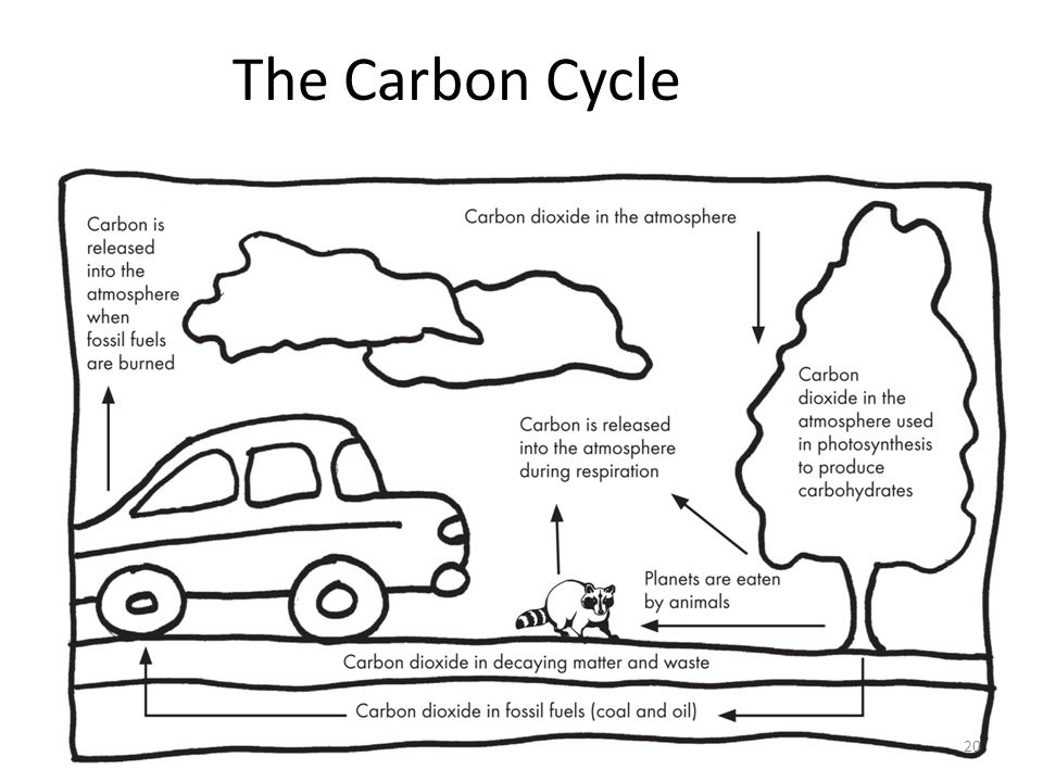 The Carbon Cycle 20