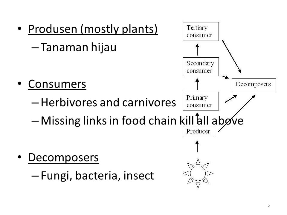 Inorganic fertilisers are most common but affect the environment Benefits of organic fertilisers to ecosystem: 1.Compounds decompose slowly and prevent leaching 2.They are cheap 3.Can be disposed of on fields and not only in landfill sites 4.Improves soil structure and improves drainage and aeration 56