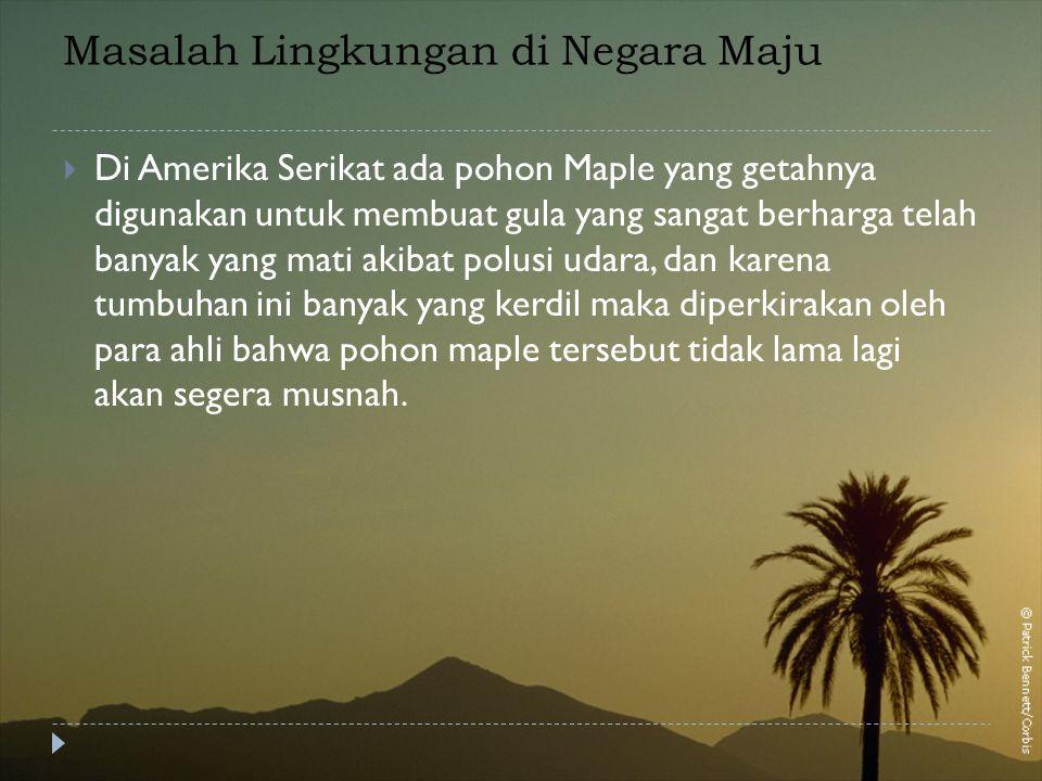 Masalah Lingkungan di Negara Maju  Di Amerika Serikat ada pohon Maple yang getahnya digunakan untuk membuat gula yang sangat berharga telah banyak ya