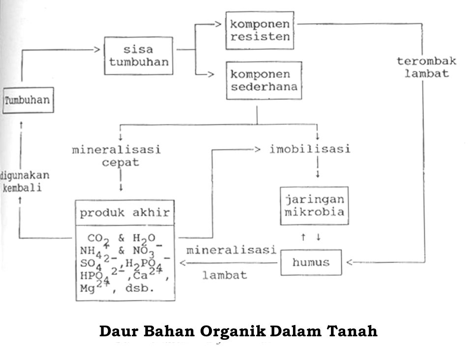 Daur Bahan Organik Dalam Tanah