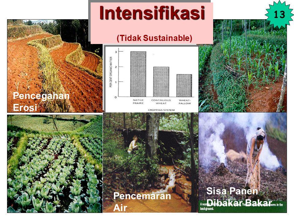Ladang Berpindah Ladang Berpindah (Sistem Terbuka: Tidak Sustainable) 12 KADAR BO(%) Zone Tanah Asli Budidaya Coklat 3-4 2-3 Coklat tua 4-5 3-4 Hitam