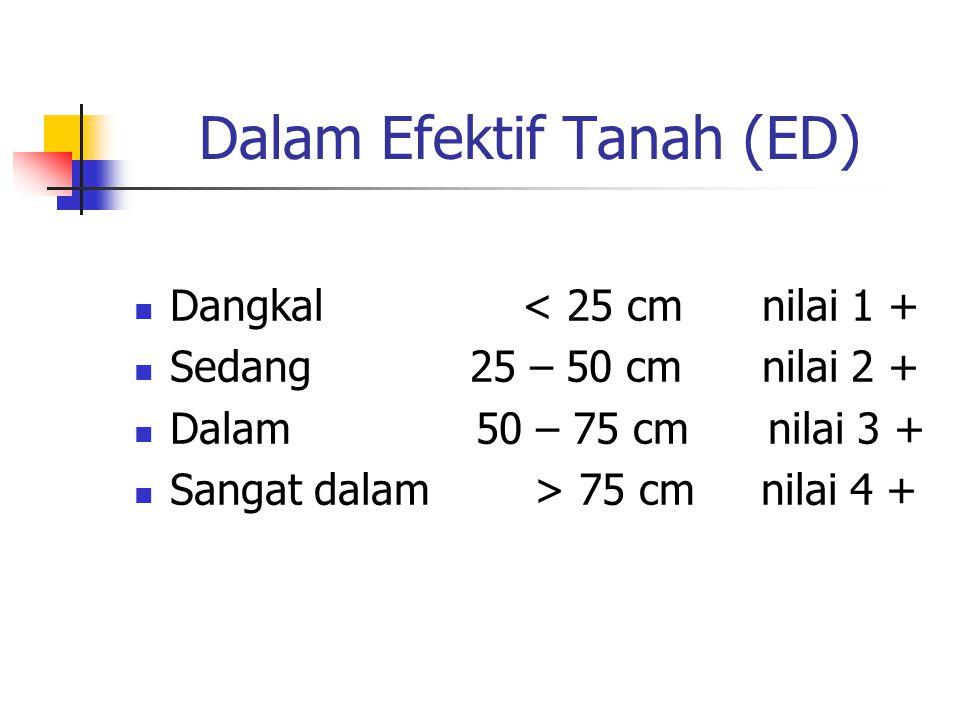 Dalam Efektif Tanah (ED) Dangkal < 25 cm nilai 1 + Sedang 25 – 50 cm nilai 2 + Dalam 50 – 75 cm nilai 3 + Sangat dalam > 75 cm nilai 4 +