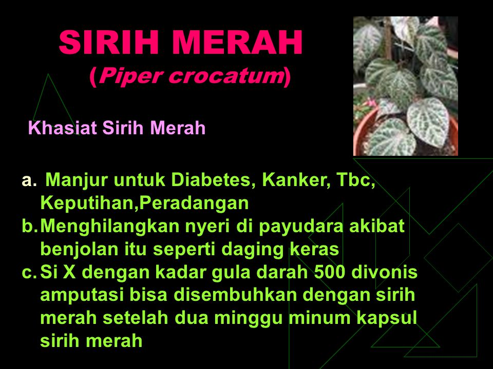SIRIH MERAH (Piper crocatum) Khasiat Sirih Merah a. Manjur untuk Diabetes, Kanker, Tbc, Keputihan,Peradangan b.Menghilangkan nyeri di payudara akibat