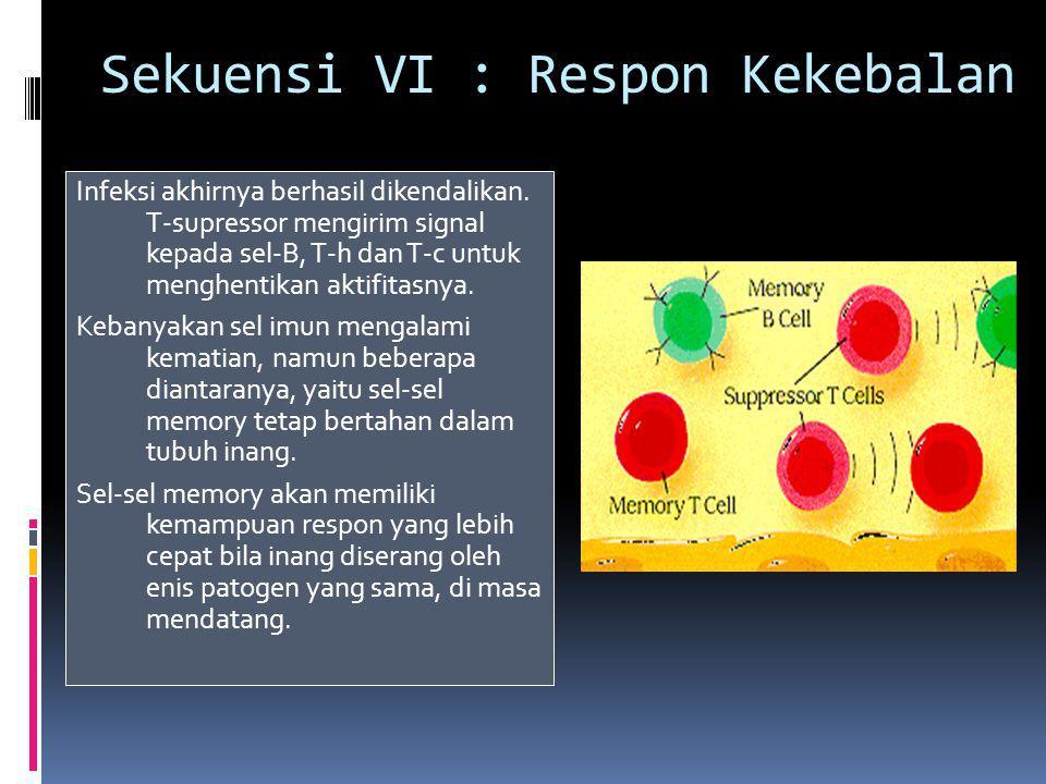 Sekuensi VI : Respon Kekebalan Infeksi akhirnya berhasil dikendalikan.