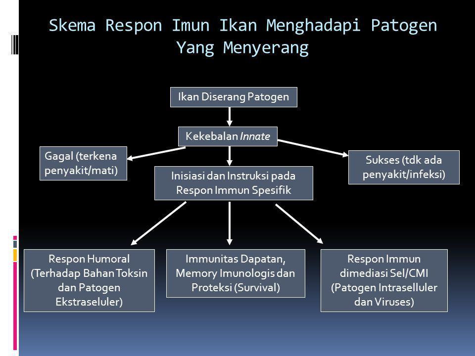 Skema Respon Imun Ikan Menghadapi Patogen Yang Menyerang Ikan Diserang Patogen Kekebalan Innate Gagal (terkena penyakit/mati) Inisiasi dan Instruksi pada Respon Immun Spesifik Sukses (tdk ada penyakit/infeksi) Respon Humoral (Terhadap Bahan Toksin dan Patogen Ekstraseluler) Respon Immun dimediasi Sel/CMI (Patogen Intraselluler dan Viruses) Immunitas Dapatan, Memory Imunologis dan Proteksi (Survival)