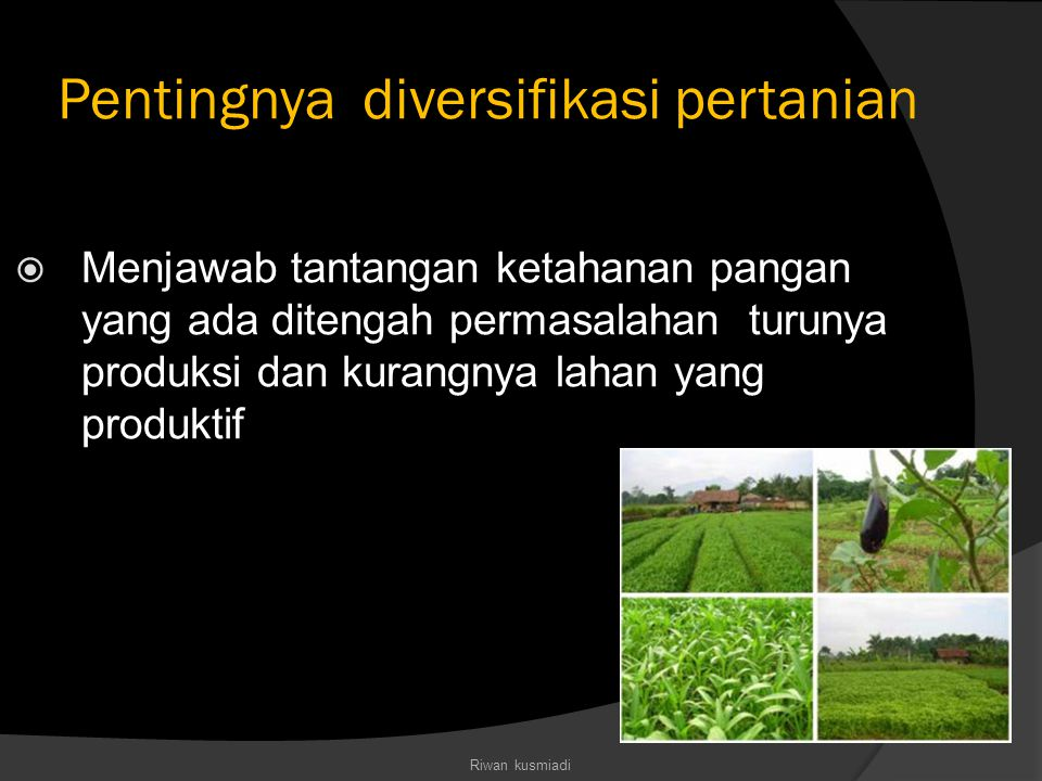Pentingnya diversifikasi pertanian  Menjawab tantangan ketahanan pangan yang ada ditengah permasalahan turunya produksi dan kurangnya lahan yang prod