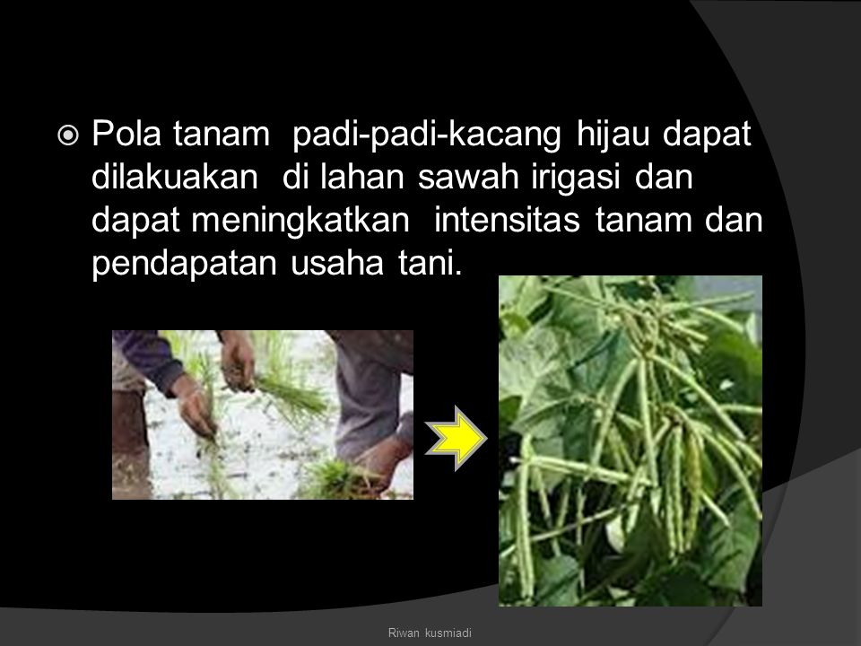  Pola tanam padi-padi-kacang hijau dapat dilakuakan di lahan sawah irigasi dan dapat meningkatkan intensitas tanam dan pendapatan usaha tani. Riwan k