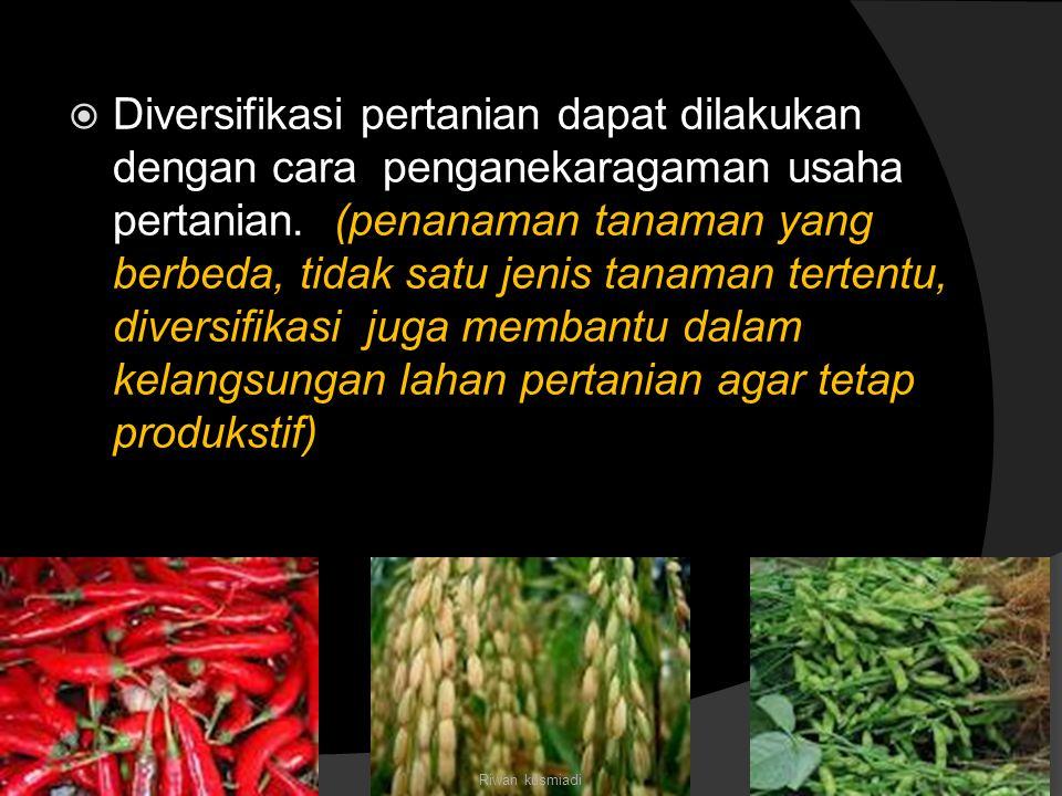  Diversifikasi pertanian dapat dilakukan dengan cara penganekaragaman usaha pertanian. (penanaman tanaman yang berbeda, tidak satu jenis tanaman tert