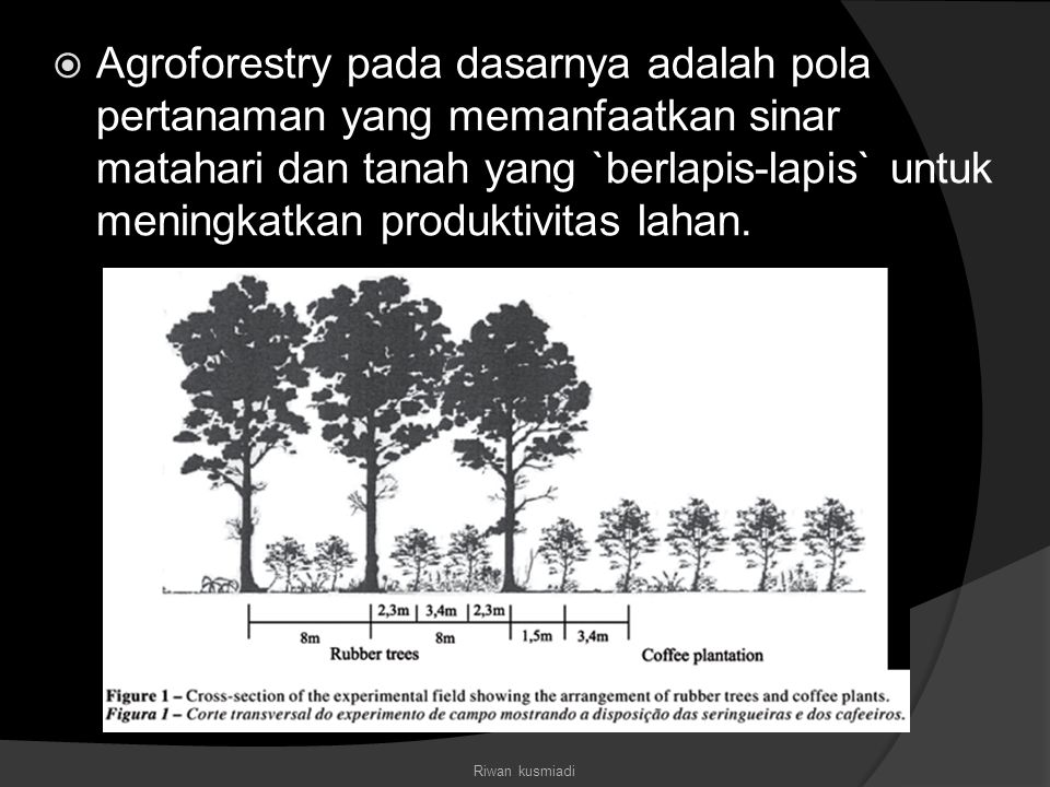  contoh : Pada sebidang tanah, seorang petani menanam sengon (Paraserianthes falcataria) yang memiliki tajuk (canopy) yang tinggi dan luas.