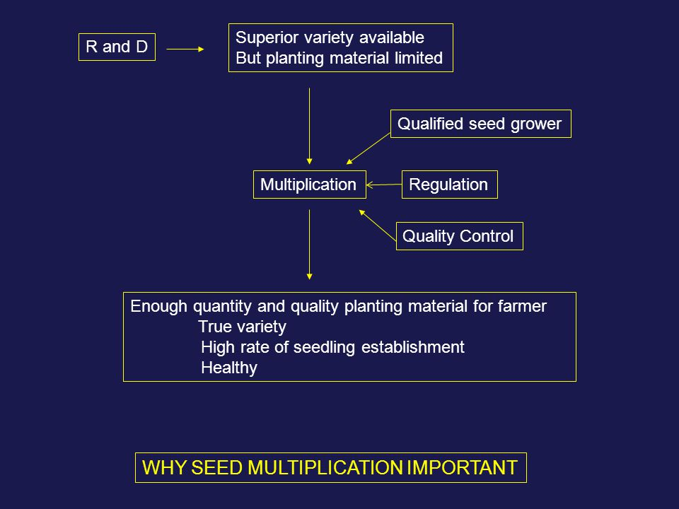 R and D Superior variety available But planting material limited Multiplication Enough quantity and quality planting material for farmer True variety High rate of seedling establishment Healthy Qualified seed grower Regulation Quality Control WHY SEED MULTIPLICATION IMPORTANT